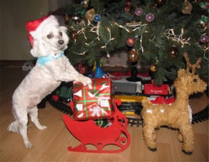 "1st Prize winner Monika from Romeoville, photo ""Present delivery crew on duty"""